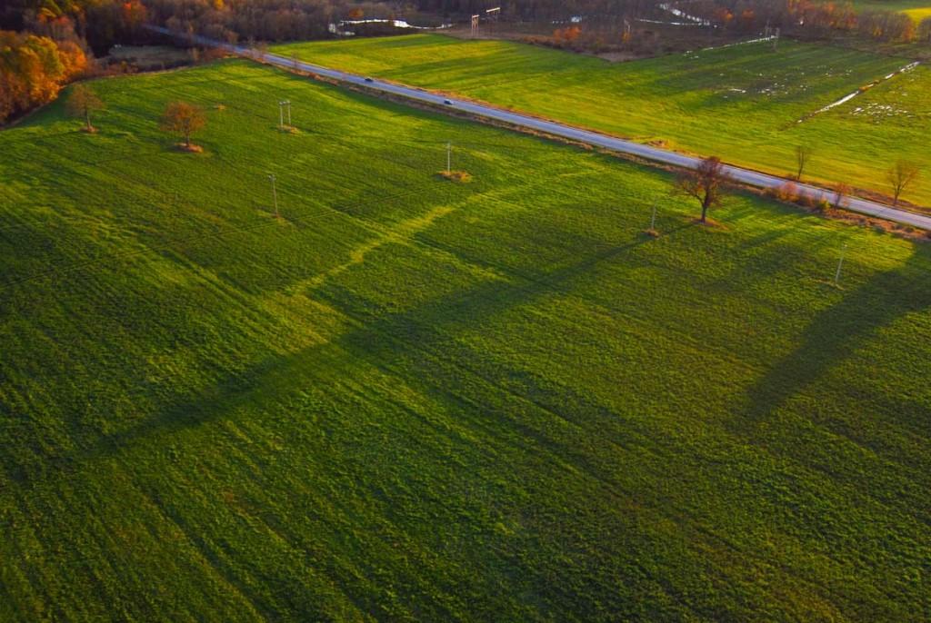 Bad hay field