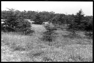 All the pines on this slope probably established in the 20th century. I assume they are all gone now. Late summer 1973.