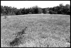 The soil must be very thin on this grassy hilltop, but pines are still establishing. Late summer 1973.