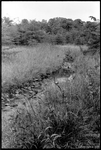 Stream in Soldiers Delight. I can't remember where this is. Fall 1973.