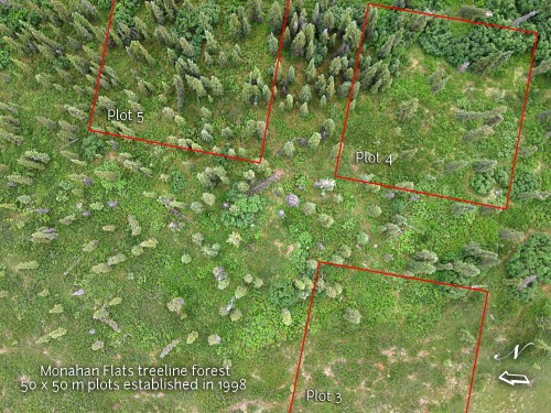 """Kite aerial photo of part of the """"At Treeline"""" transect at Monahan Flats."""