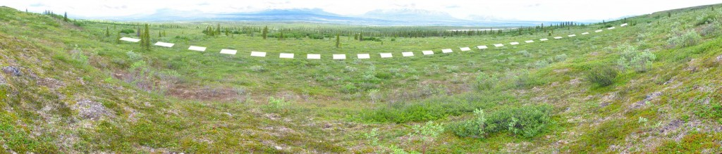 Panorama of the above treeline transect at Monahan Flats. Dashed line  marks the location of five 50x50m plots. The treeline transect is down the hill in the distance in the forest of spruce trees.